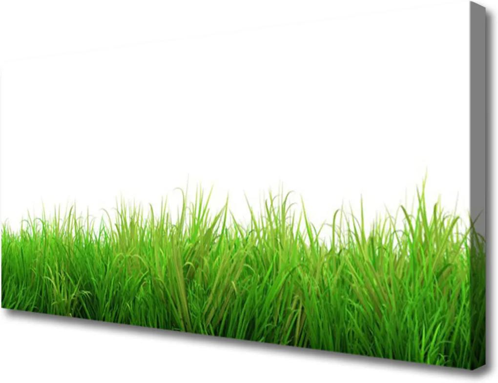 Obraz Canvas Tráva rostlina příroda