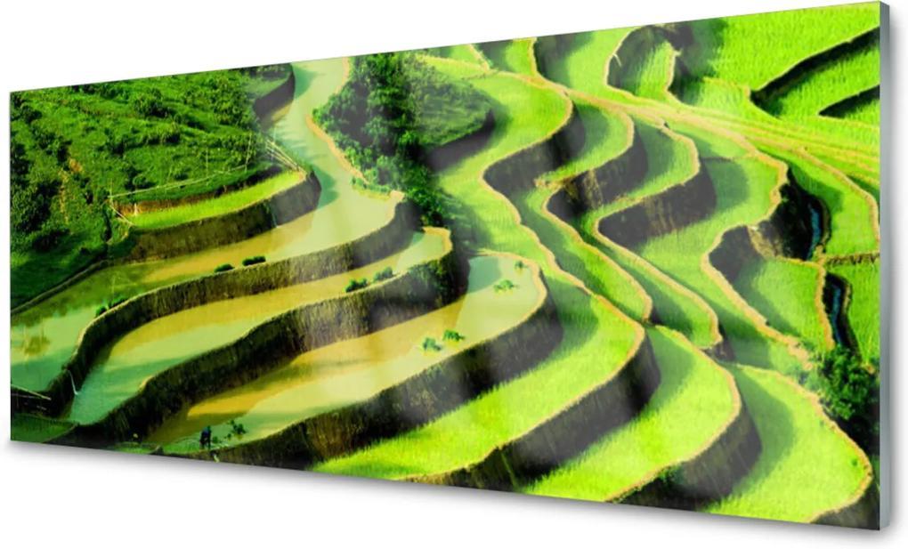 Skleněný obraz Pole rýže les umění