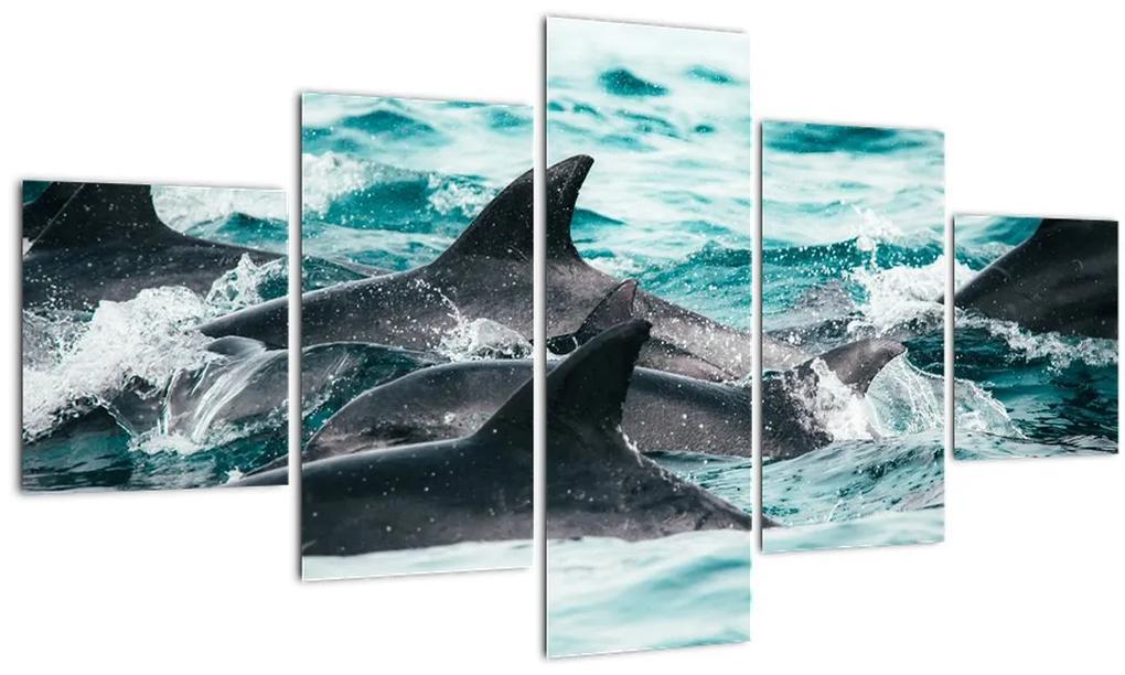 Obraz - Delfíny v oceáne (125x70 cm), 40 ďalších rozmerov