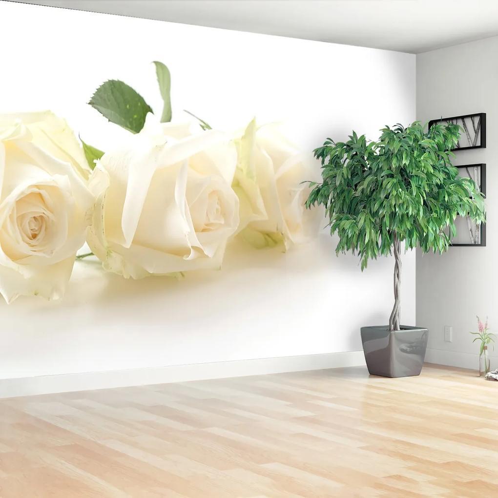 Fototapeta biele ruže