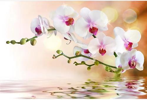 Vliesové fototapety, rozmer 375 cm x 250 cm, biela orchidea, DIMEX MS-5-0147