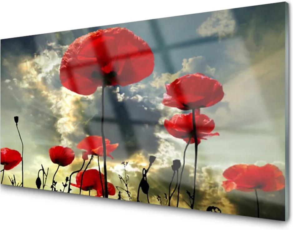 Plexisklo obraz Máky květiny příroda