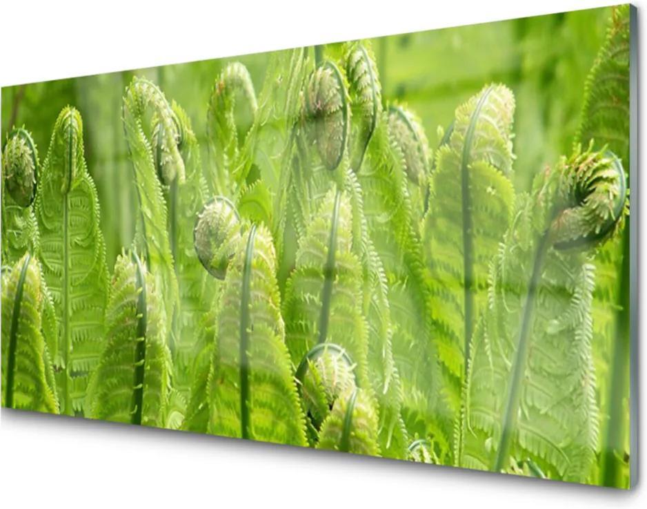 Obraz plexi Sklenený Rastlina Príroda