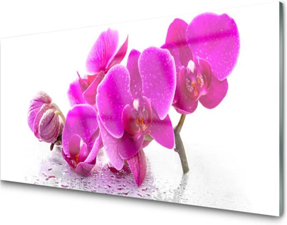 Obraz na akrylátovom skle Sklenený Kvety Rastlina