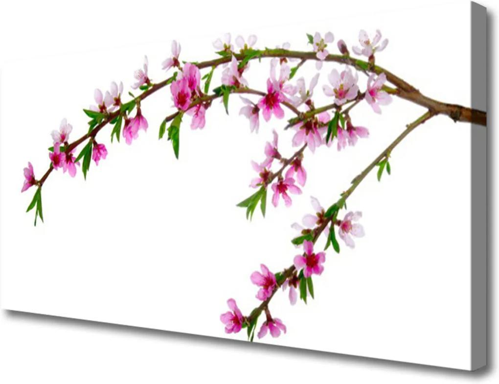 Obraz na plátně Vetva Kvet Príroda