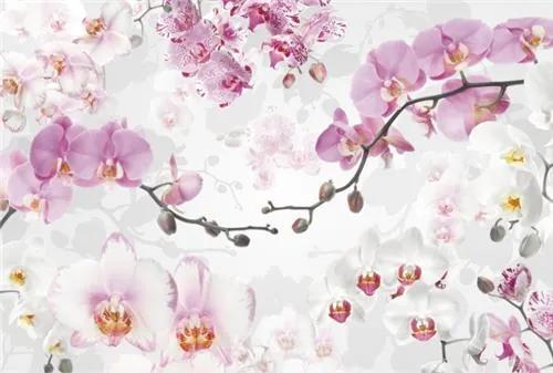 Vliesové fototapety, rozmer 368 cm x 248 cm, orchidea, Komar XXL4-032