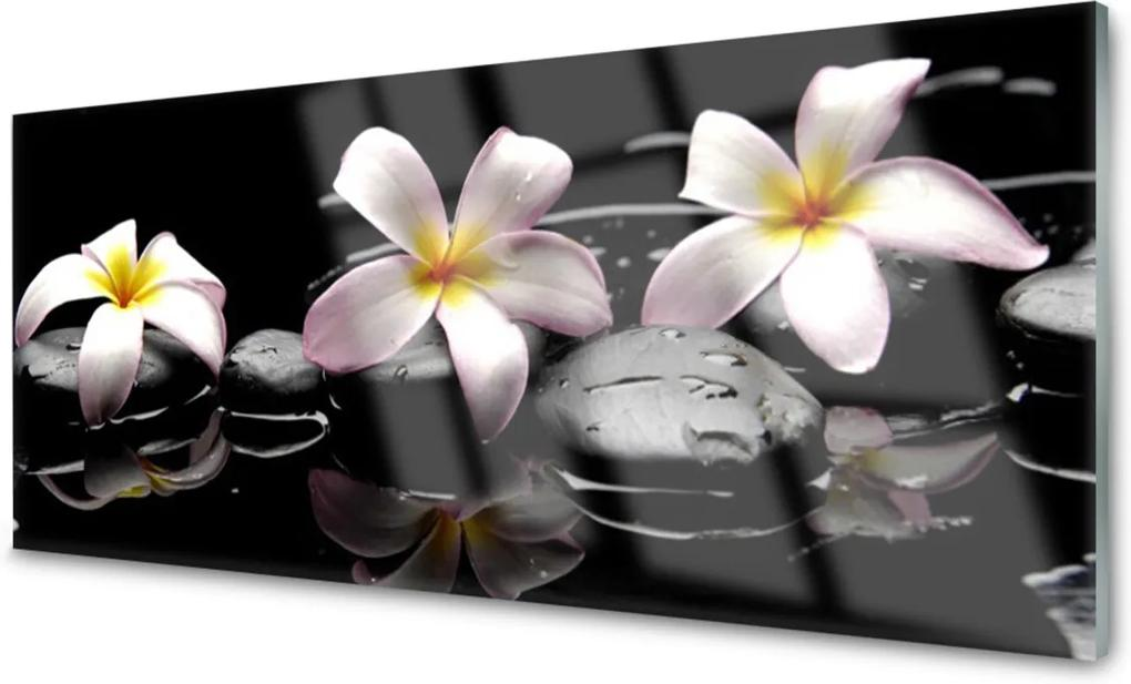 Obraz na akrylátovom skle Kvet Kamene Rastlina