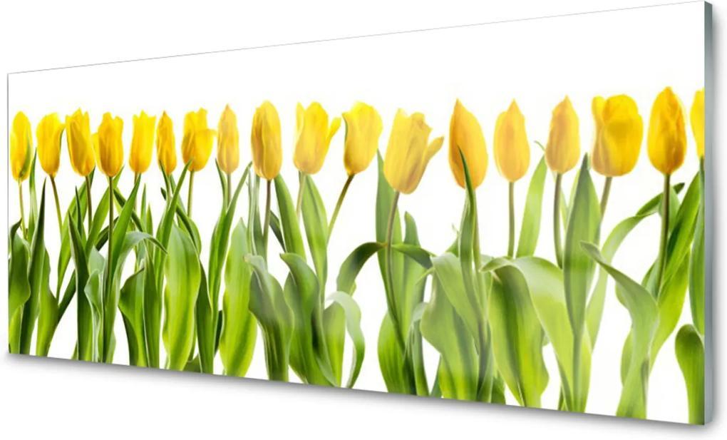 Obraz plexi Tulipány Kvety Príroda