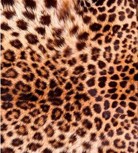 Vliesové fototapety, rozmer 225 cm x 250 cm, leopardia koža, DIMEX MS-3-0184