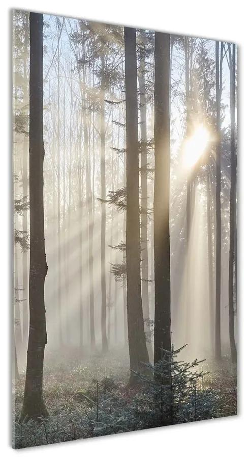 Moderný akrylový fotoobraz Hmla v lese pl-oa-70x140-f-98968412