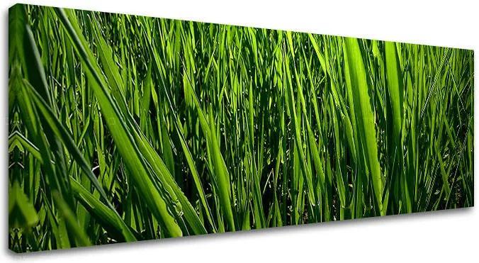 Obraz na stenu Super Panoráma RASTLINY RA010E14