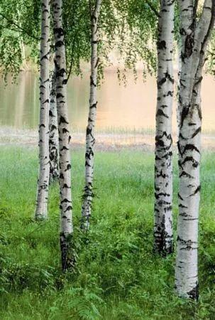 Fototapety, rozmer 183 x 254 cm, Nordic Forest, W+G 381