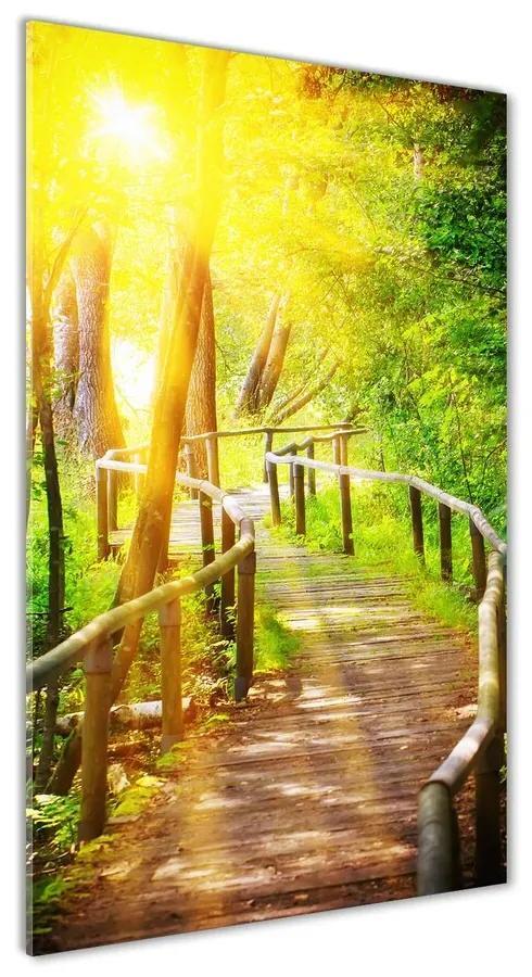 Foto obraz akrylové sklo Chodník v lese pl-oa-70x140-f-83709932