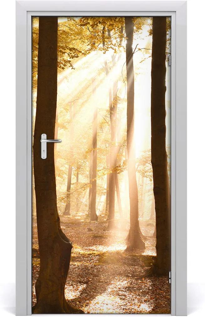Fototapeta na dveře samolepící Les podzim