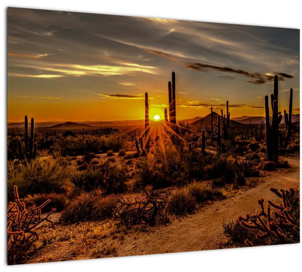 Obraz - Koniec dňa v arizonskej púšti (70x50 cm), 40 ďalších rozmerov