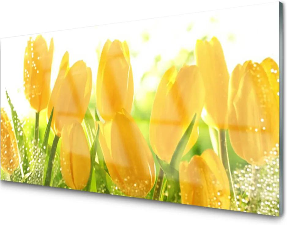 Sklenený obklad Do kuchyne Tulipány Kvety Rastlina