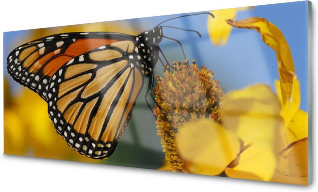 Skleněný obraz Motýľ Kvet Príroda
