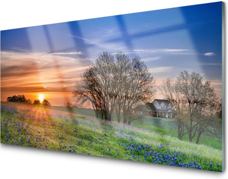 Plexisklo obraz Louka slunce krajina