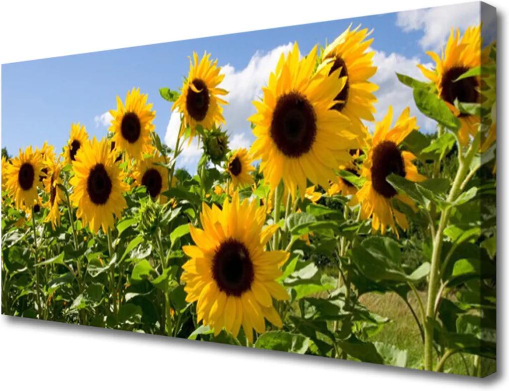 Obraz Canvas Slunečnice květ rostlina