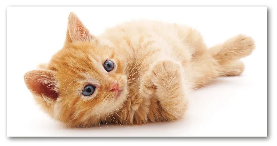 Foto obraz akrylový do obývačky Červená mačka pl-oa-140x70-f-126034635