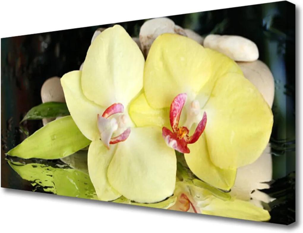 Obraz Canvas Okvětní plátky orchidej
