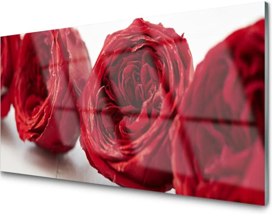 Obraz plexi Ruže Kvety Rastlina