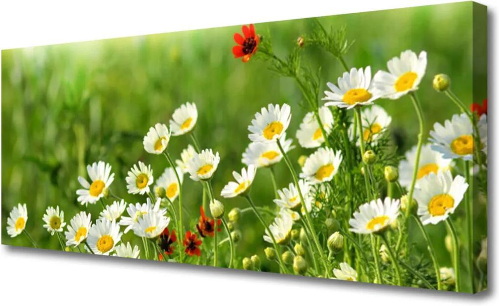 Obraz Canvas Sedmokráska Rastlina Príroda