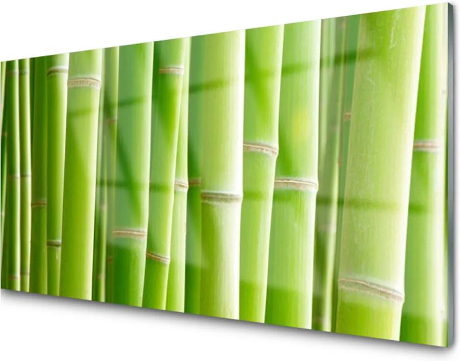 Obraz na skle Bambus stonek květ rostlina