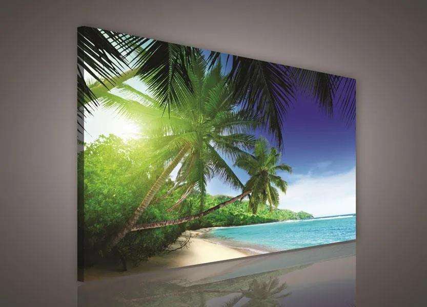 Obraz na plátne, rozmer 75 x 100 cm, palmy, IMPOL TRADE PP226O1