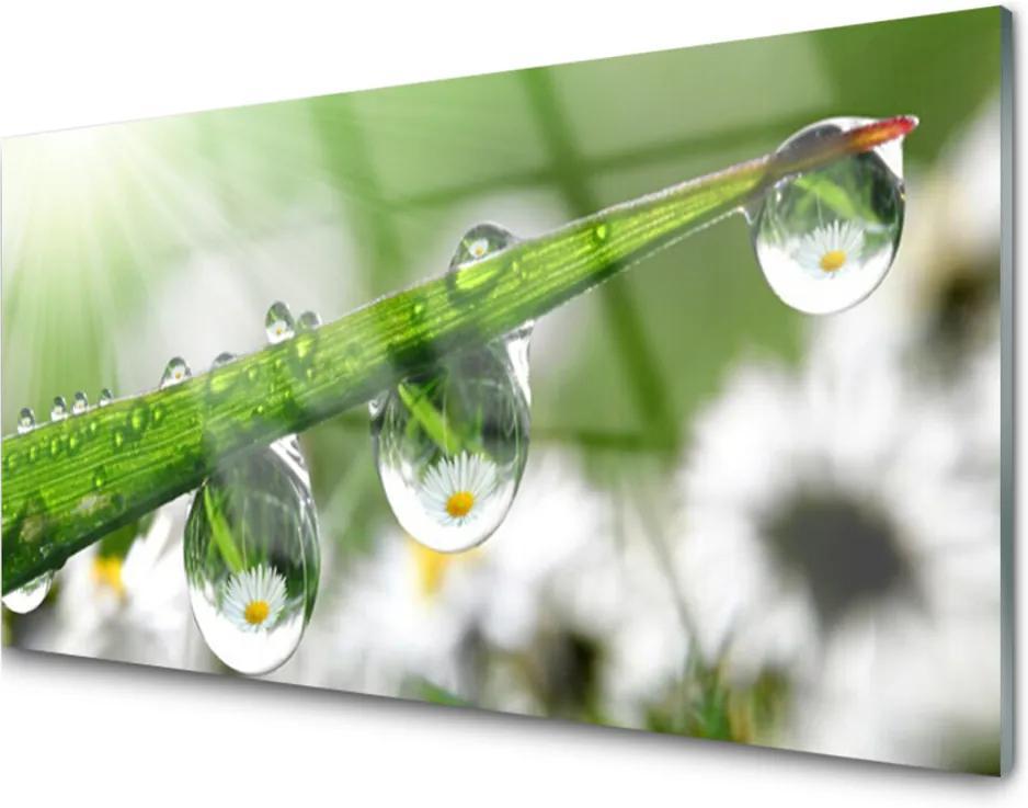Plexisklo obraz Tráva rosa kapky příroda