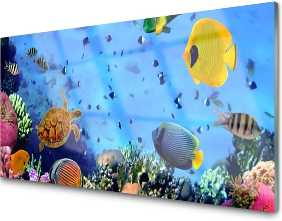 Obraz na skle Koralový Útes Ryba Príroda