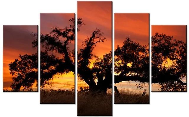Tlačený obraz Dub pri západe slnka - Don McCullough 100x63cm 804A_5D