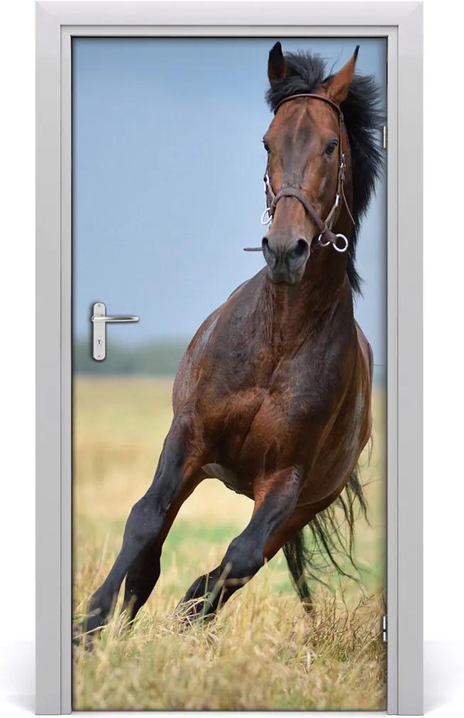 Samolepící fototapeta na dveře Kůň na poli