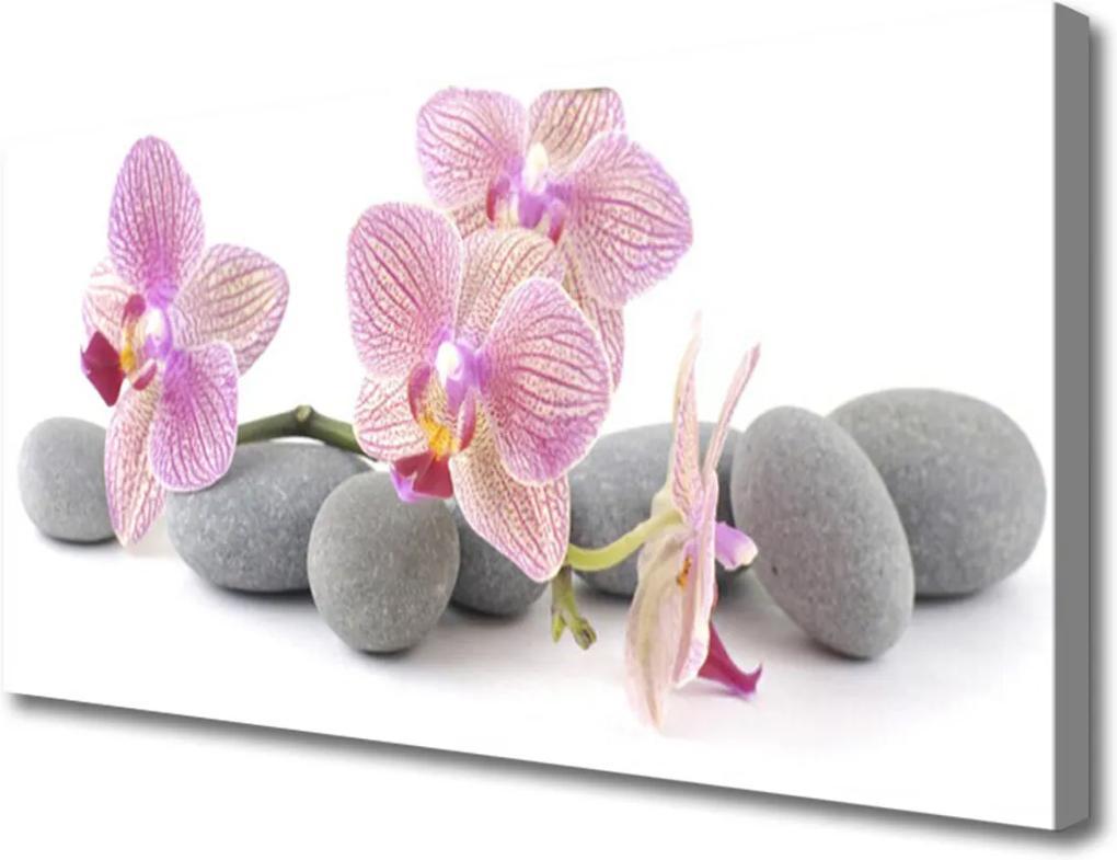 Obraz na plátně Strom kameny rostlina