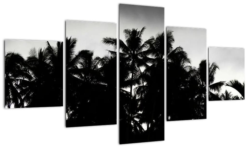 Obraz čiernobiely - palmy (125x70 cm), 40 ďalších rozmerov