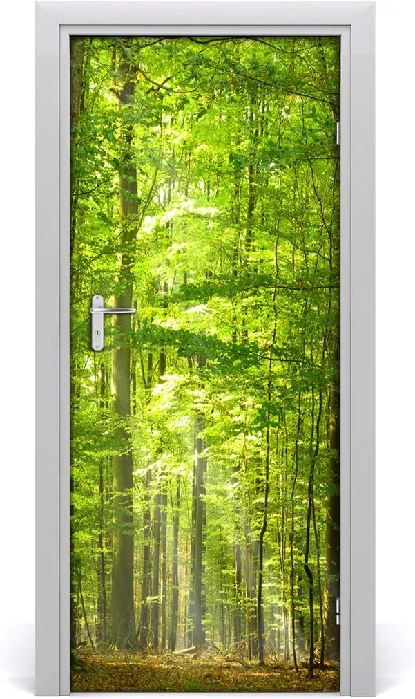 Fototapeta na dveře Bukový les
