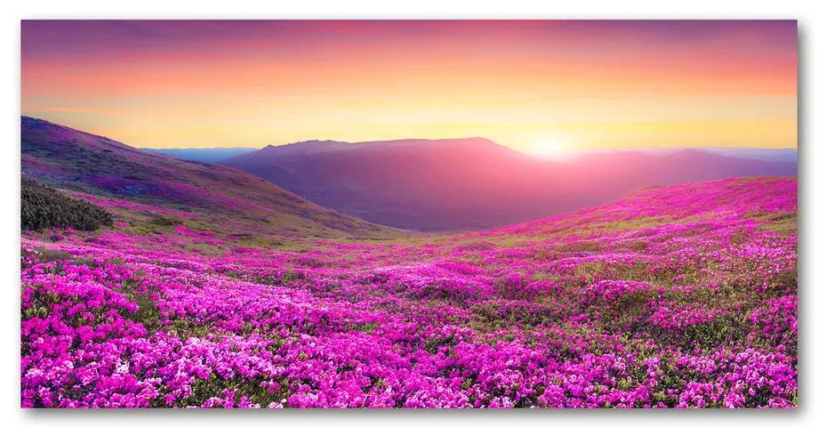 Foto obraz akrylový Ružové kopca pl-oa-140x70-f-72586785