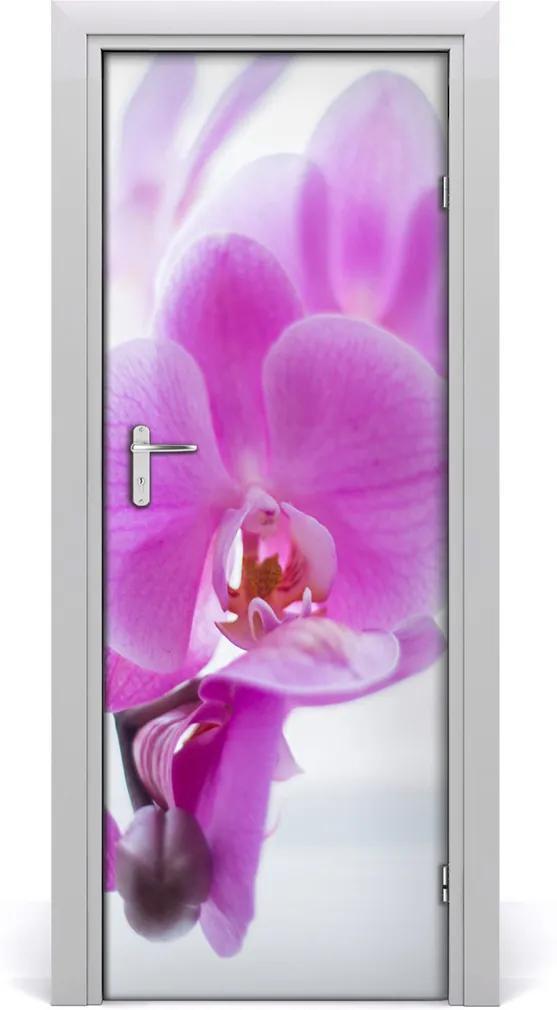 Fototapeta na dvere  ružová orchidea