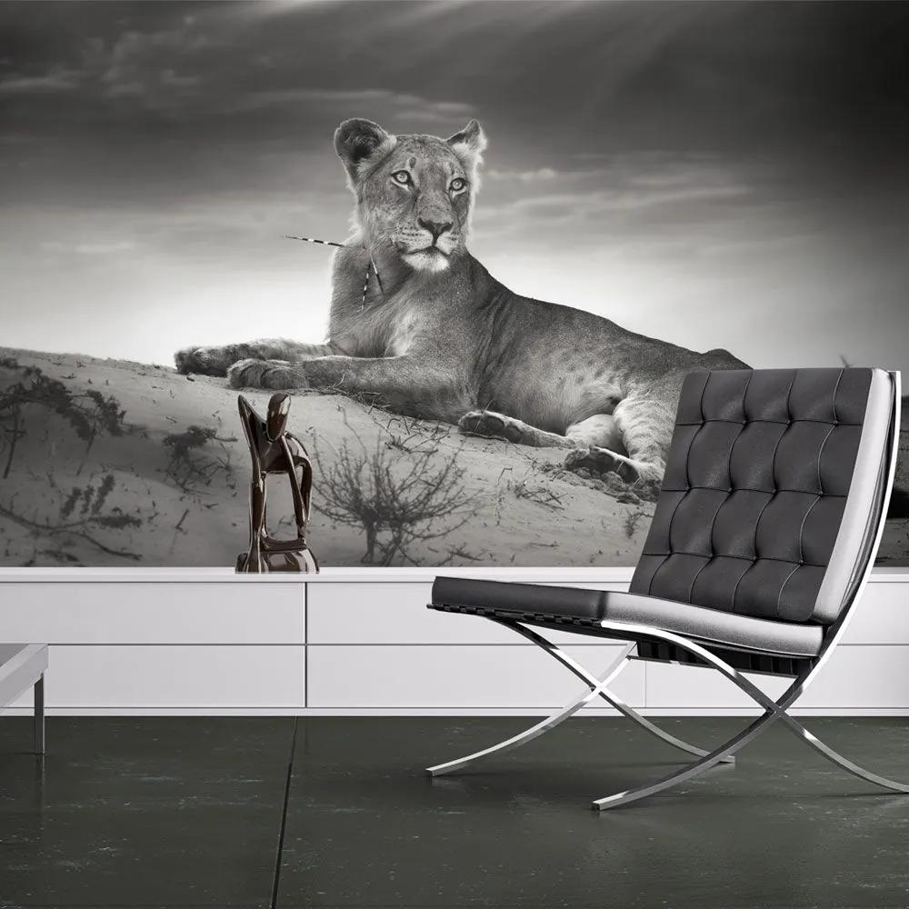 Fototapeta - Black and white lioness 400x309