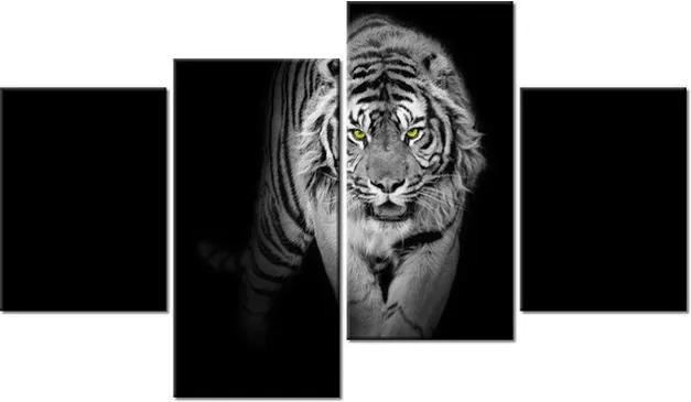 Tlačený obraz Nebezpečný tiger v tme 120x70cm 2359A_4AA