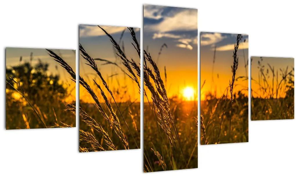 Obraz pole pri západe slnka (125x70 cm), 40 ďalších rozmerov