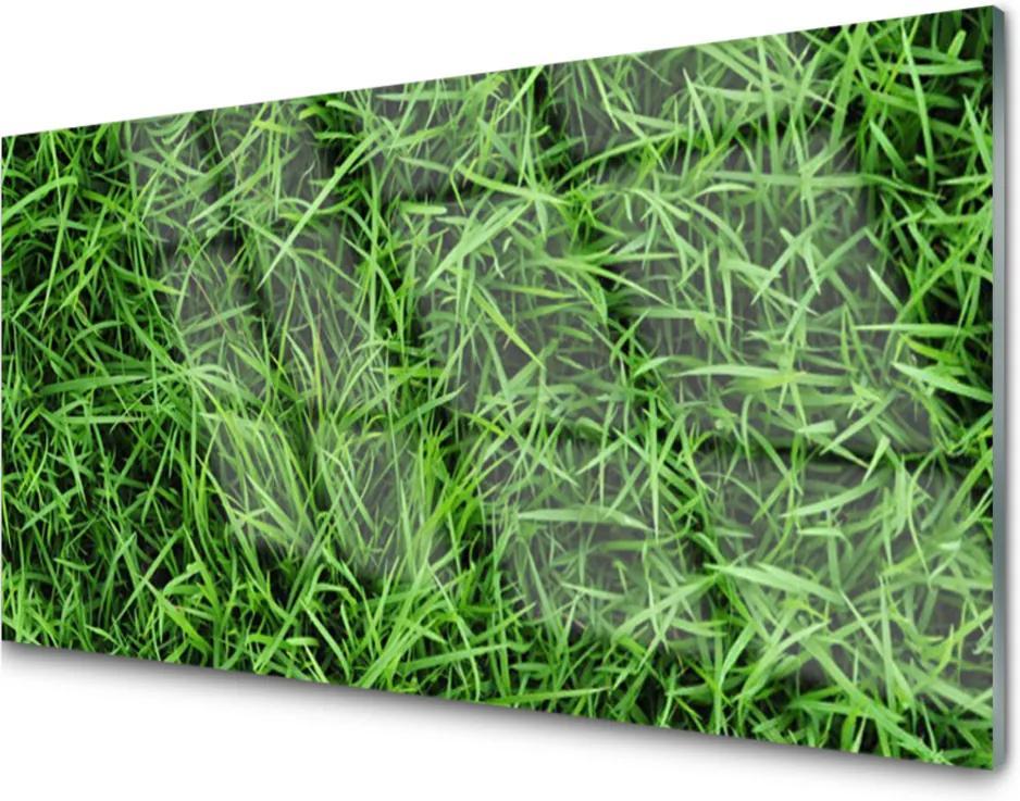 Obraz na akrylátovom skle Sklenený Tráva Trávnik