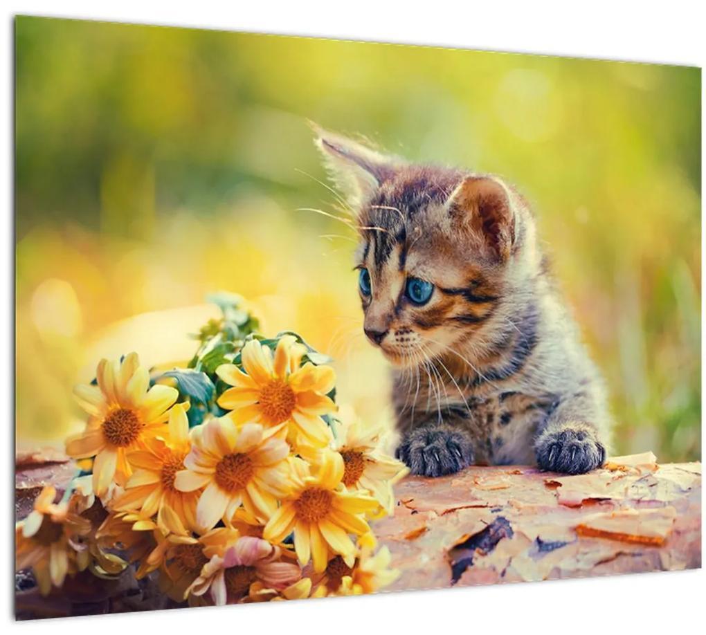 Obraz mačiatka pozerajúce sa na kvetinu (70x50 cm), 40 ďalších rozmerov