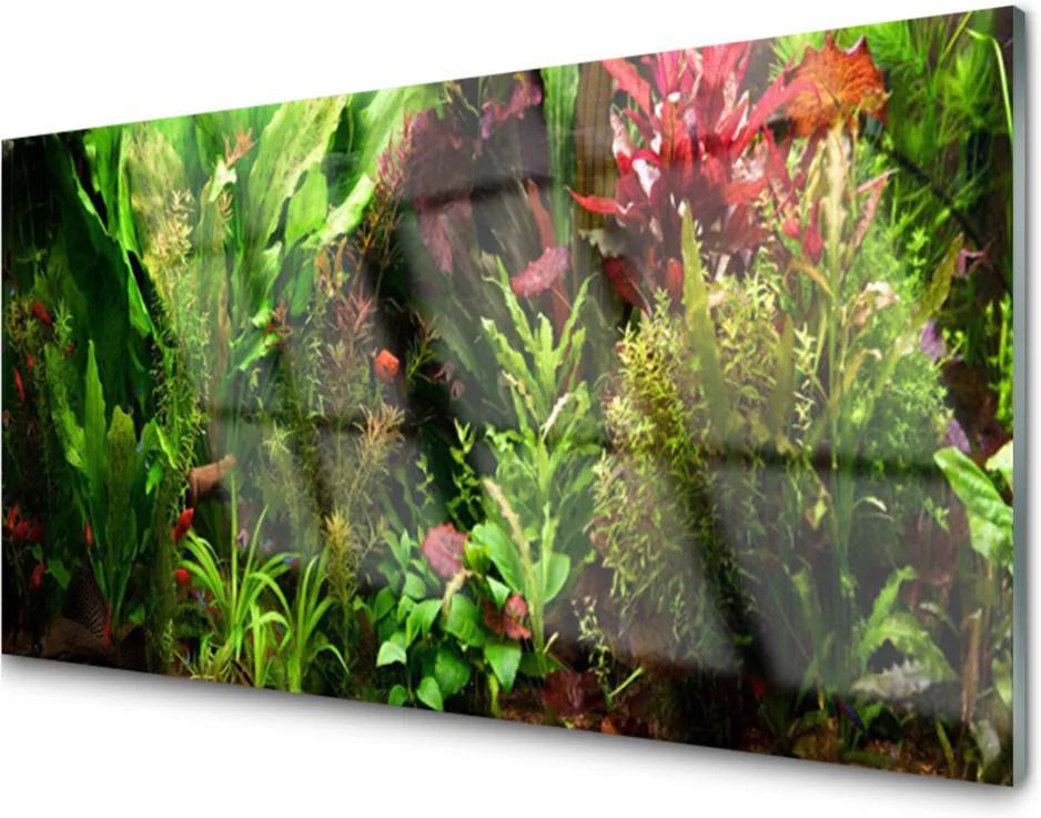 Skleněný obraz Rastlina Kvety Príroda