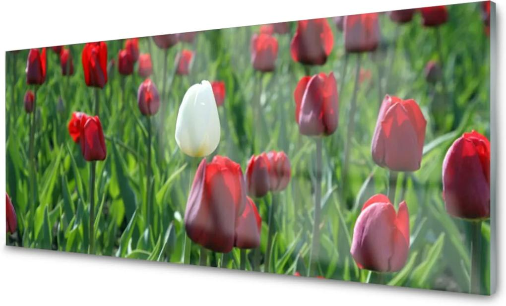 Sklenený obklad Do kuchyne Tulipány Kvety Príroda