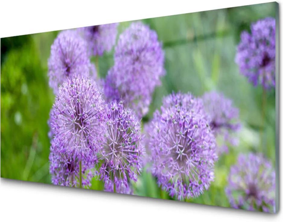 Obraz plexi Fialové Kvety Lúka