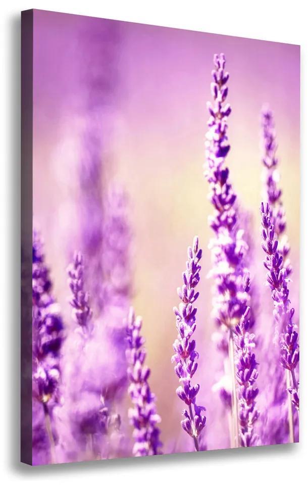 Moderný obraz canvas na ráme Levanduľa pl-oc-70x100-f-66699141