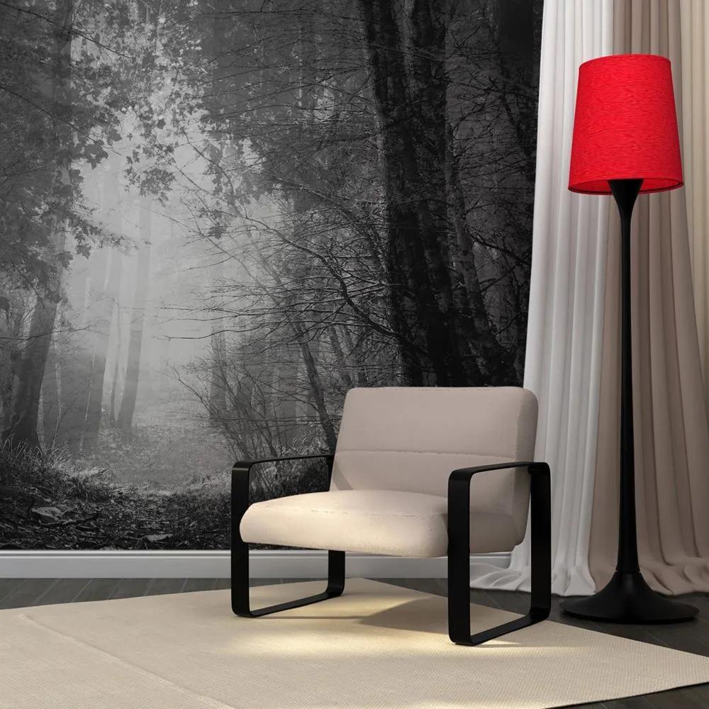 Fototapeta - Forest of shadows 200x154