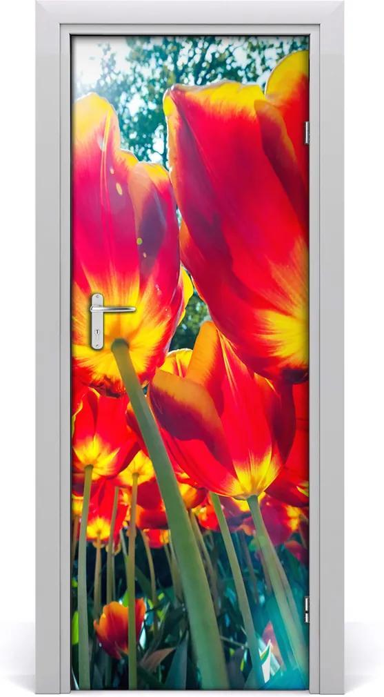 Fototapeta na dveře Tulipány