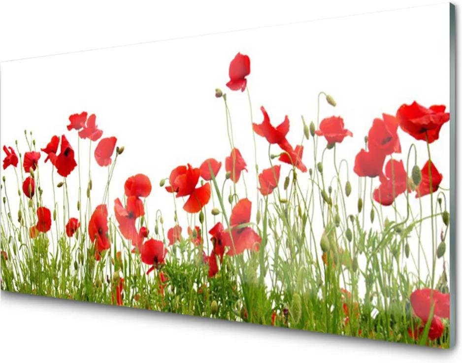 Skleněný obraz Louka Máky Květiny Příroda